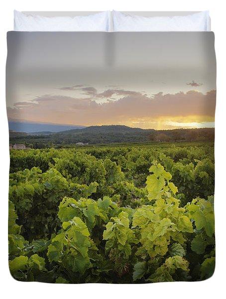 Vineyard Near Malemort-du-comtat Duvet Cover by Andy Kerry