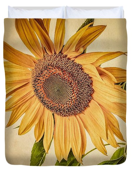 Vintage Sunflower Photograph by Edward Fielding