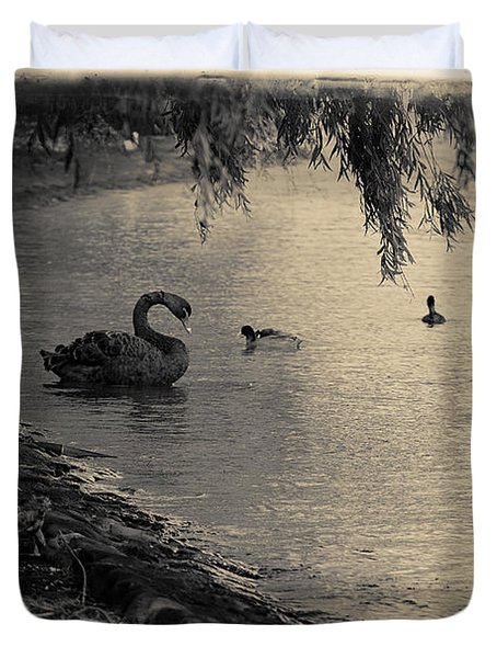 Vintage Views II - Swans And Cygnets Duvet Cover
