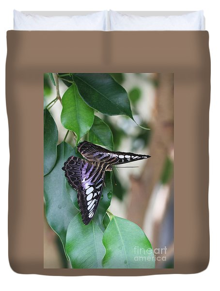 Violet Clipper Butterfly Duvet Cover