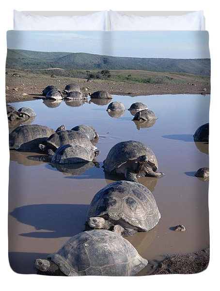 Volcan Alcedo Giant Tortoise Wallowing Duvet Cover by Tui De Roy