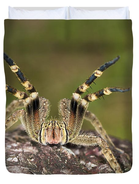 Wandering Spider In Defensive Posture Duvet Cover by Konrad Wothe
