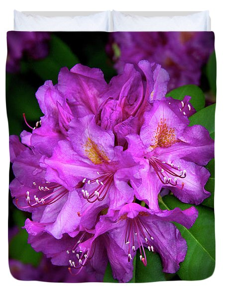 Washington Coastal Rhododendron Duvet Cover by Ed  Riche