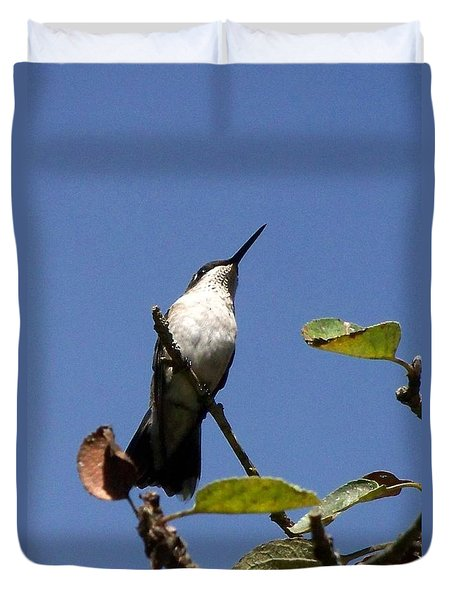 Watchful Female Hummingbird  Duvet Cover by Eunice Miller