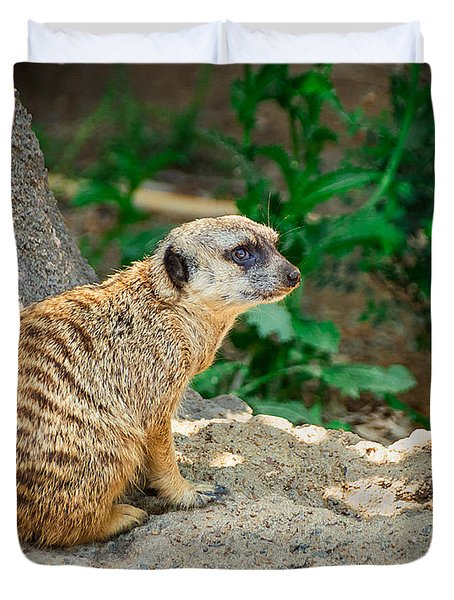 Watchful Meerkat Duvet Cover by Jon Woodhams