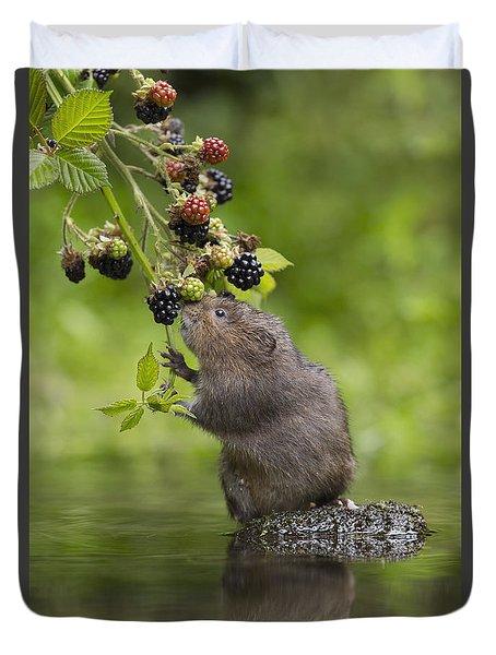 Water Vole Eating Blackberries Kent Uk Duvet Cover