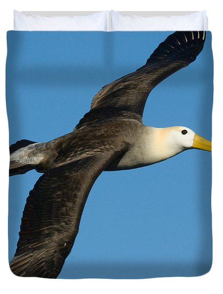 Waved Albatross Diomedea Irrorata Duvet Cover by Panoramic Images