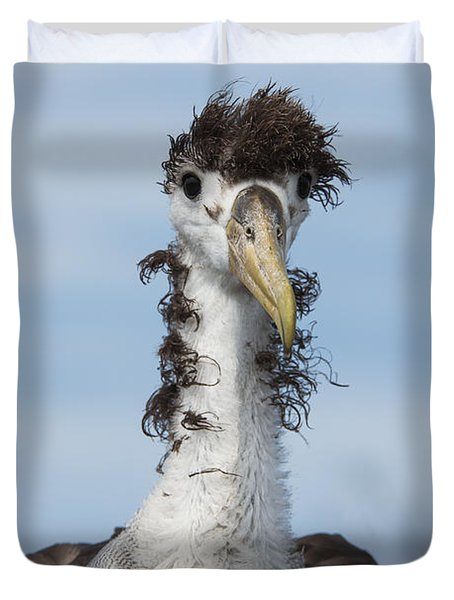Waved Albatross Molting Juvenile Duvet Cover by Pete Oxford