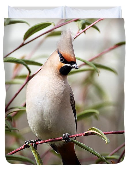 Waxwing Duvet Cover by Grant Glendinning