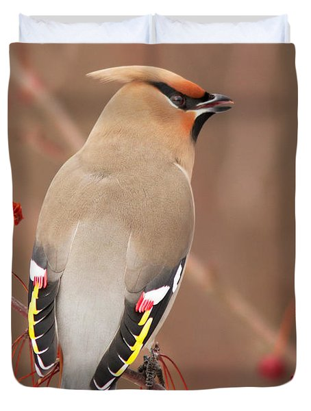 Waxwing In Winter Duvet Cover by Mircea Costina Photography