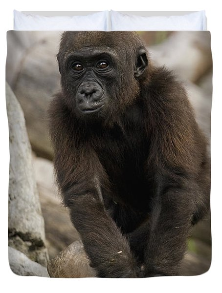 Western Lowland Gorilla Baby Duvet Cover