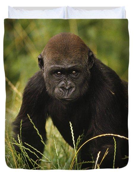 Western Lowland Gorilla Juvenile Duvet Cover by Gerry Ellis