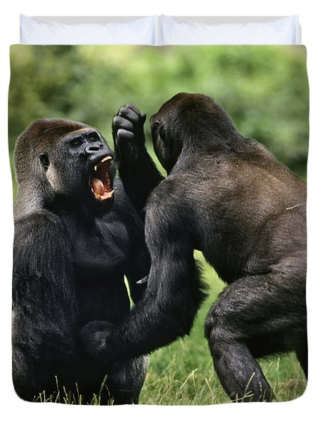 Western Lowland Gorilla Males Fighting Duvet Cover by Konrad Wothe