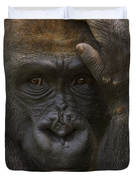 Western Lowland Gorilla With Hand Duvet Cover by San Diego Zoo