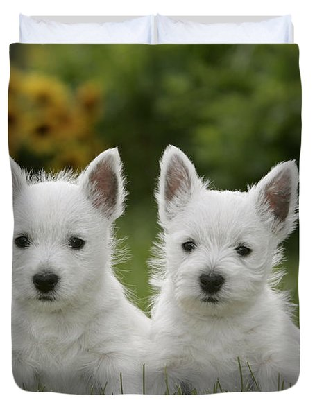 Westie Puppies Duvet Cover by Rolf Kopfle