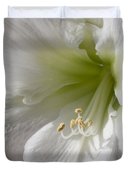 White Amaryllis Duvet Cover by Adam Romanowicz