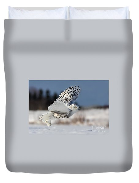 White Angel - Snowy Owl In Flight Duvet Cover