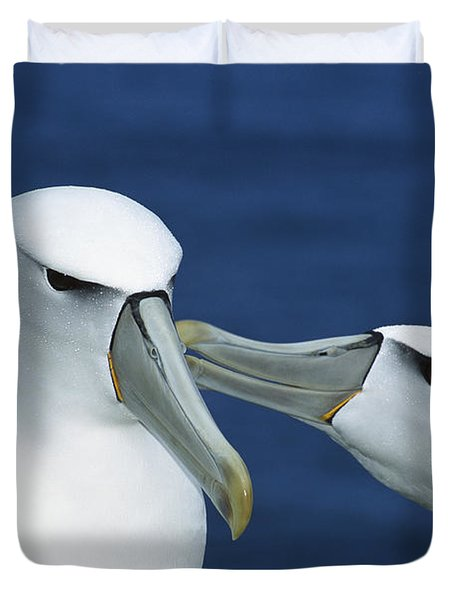 White-capped Albatrosses Courting Duvet Cover by Tui De Roy