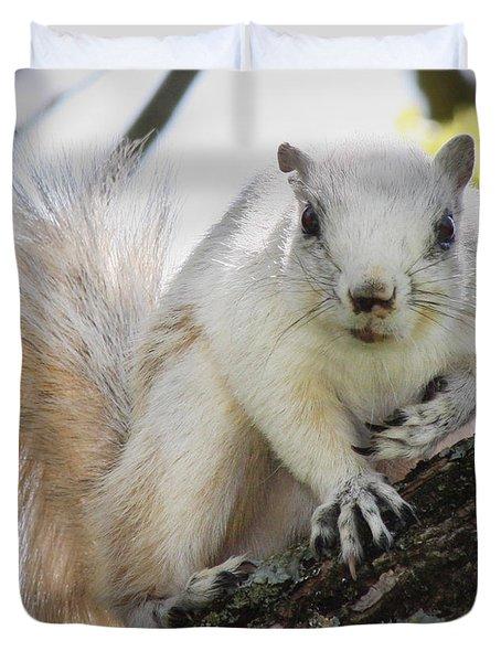 White Fox Squirrel Duvet Cover