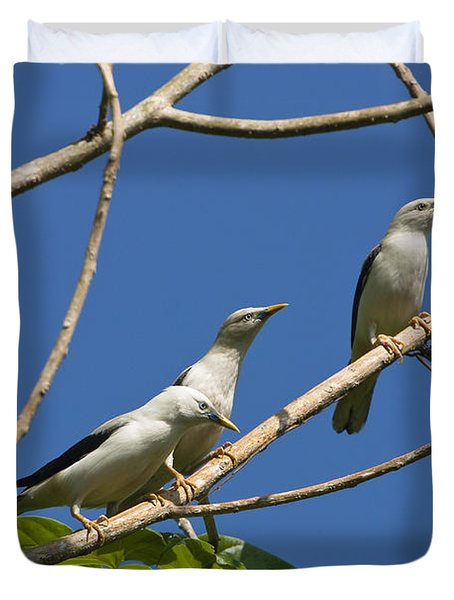 White-headed Starlings Havelock Isl Duvet Cover by Konrad Wothe