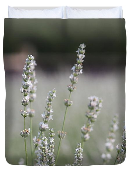 Duvet Cover featuring the photograph White Lavender by Lynn Sprowl