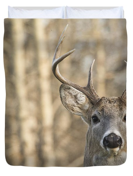 White-tailed Buck Duvet Cover