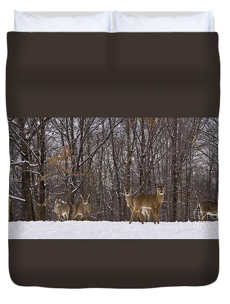 White Tailed Deer Duvet Cover by Anthony Sacco
