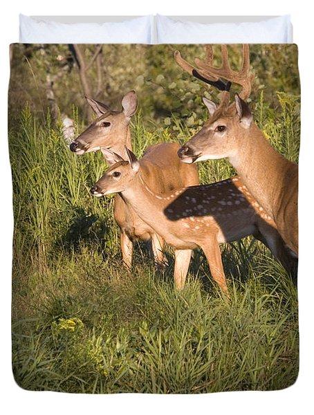 White-tailed Deer Family Duvet Cover
