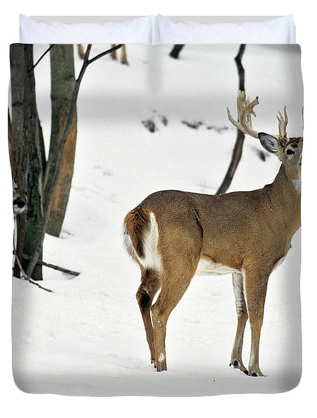 Whitetail Deer In Snow Odocoileus Duvet Cover