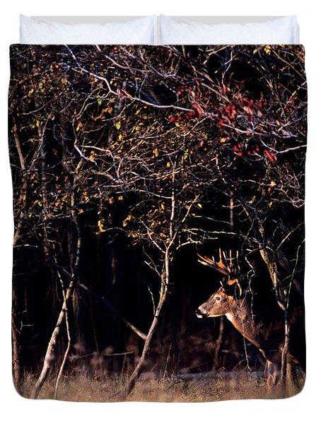 Whitetail Deer Odocoileus Virginianus Duvet Cover
