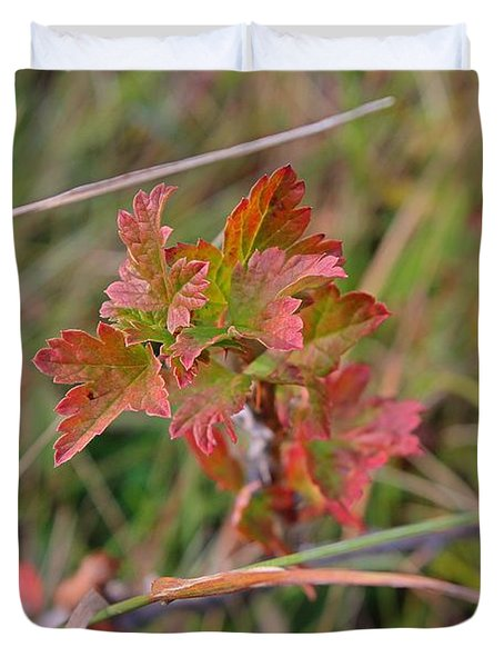 Duvet Cover featuring the photograph Wild Gooseberry Leaves by Ann E Robson