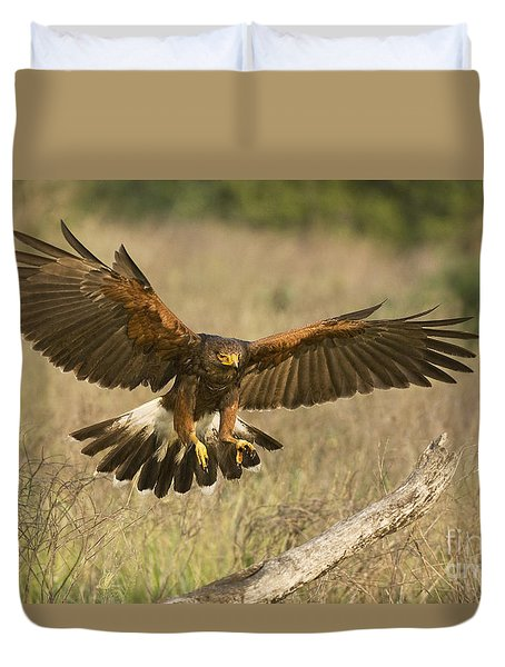 Wild Harris Hawk Landing Duvet Cover by Dave Welling