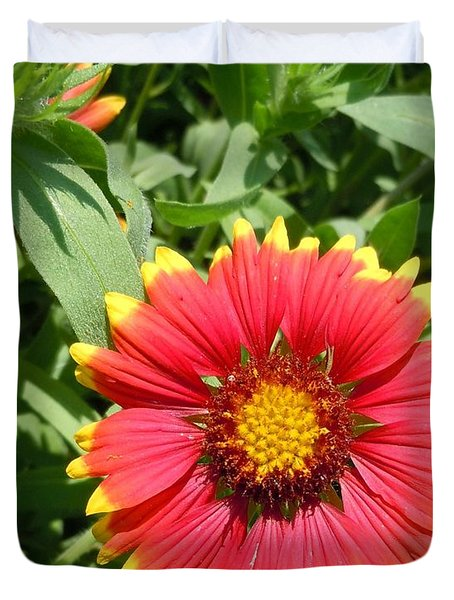 Duvet Cover featuring the photograph Wild Red Daisy #2 by Robert ONeil
