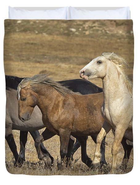 Wild Stallion Herd Pryor Mountain Duvet Cover