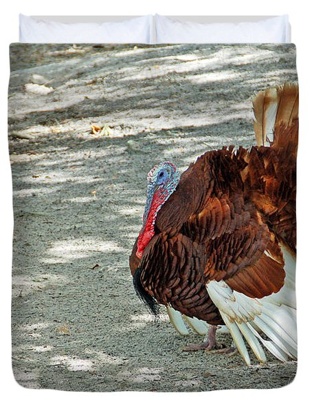 Wild Turkey Duvet Cover by Aimee L Maher Photography and Art Visit ALMGallerydotcom