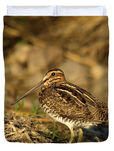 Wilson's Snipe Duvet Cover by James Peterson