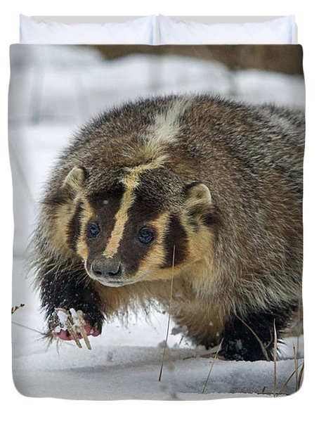 Duvet Cover featuring the photograph Winter Badger by Jack Bell