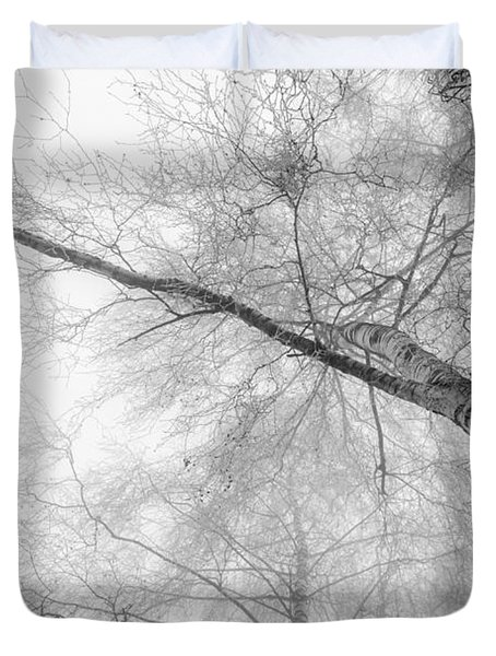 Winter Birch - Bw Duvet Cover by Hannes Cmarits
