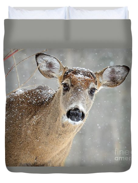 Winter Buck Duvet Cover by Amy Porter