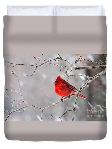 Winter Cardinal Duvet Cover by Debbie Green