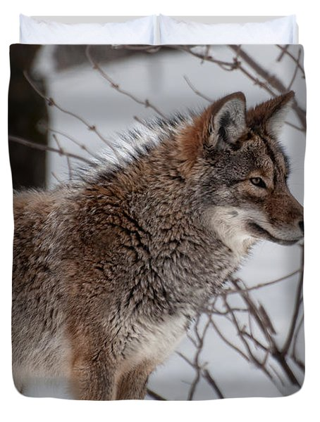 Duvet Cover featuring the photograph Winter Coyote by Bianca Nadeau