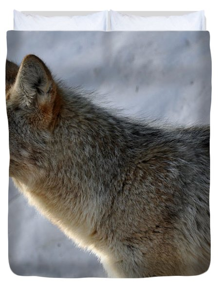 Winter Coyote In Yellowstone Duvet Cover by Bruce Gourley