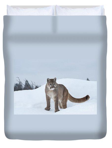 Winter Mountain Lion  Duvet Cover