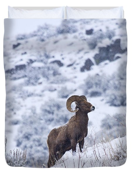 Winter Ram Duvet Cover by Mike  Dawson