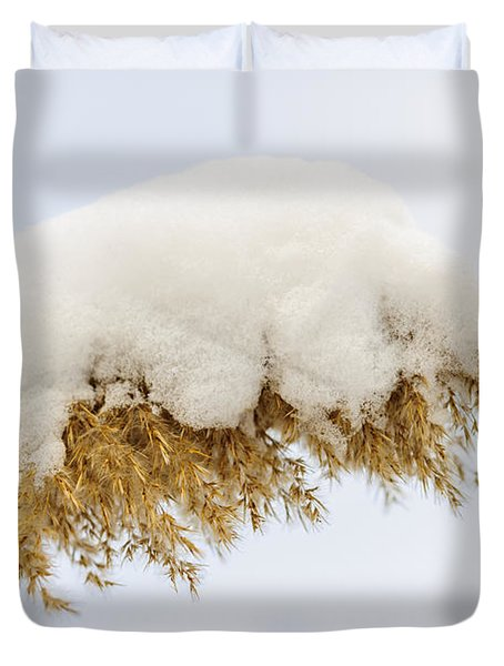 Winter Reed Under Snow Duvet Cover by Elena Elisseeva