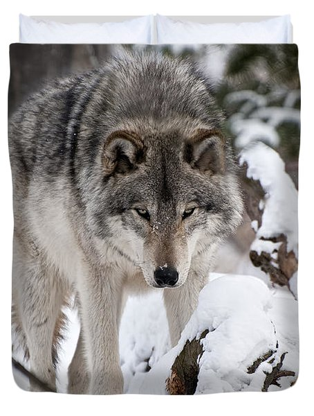 Duvet Cover featuring the photograph Winter Timber Wolf by Wolves Only
