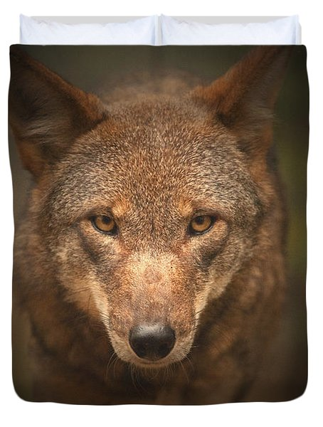 Wolf Stare Duvet Cover by Karol Livote