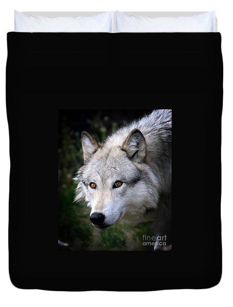 Wolf Stare Duvet Cover