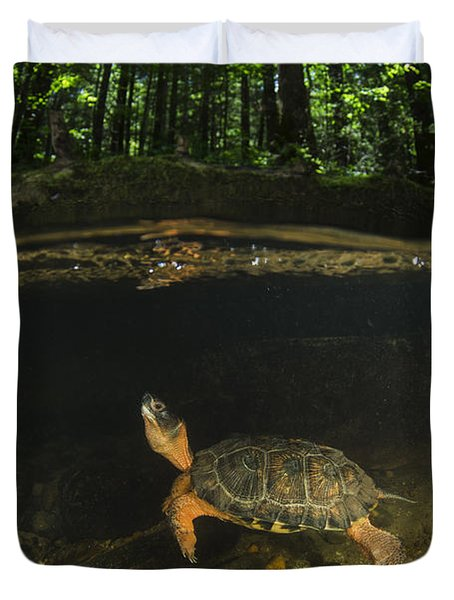Wood Turtle Swimming North America Duvet Cover