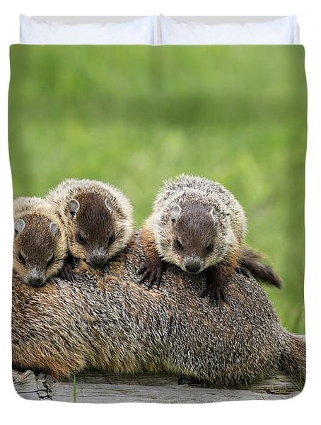 Woodchuck Carrying Young Minnesota Duvet Cover by Jurgen & Christine Sohns